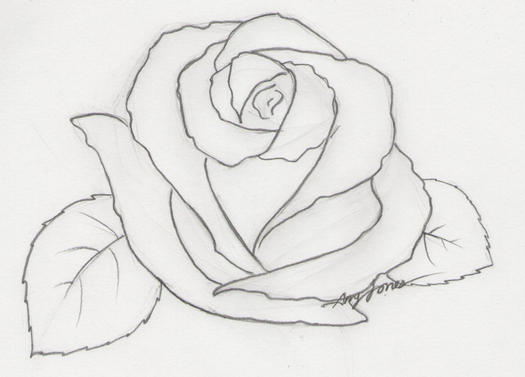 Drawn rose draw a On 1000 Roses Drawing Rose