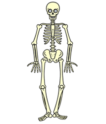 Drawn skeleton A to How Draw Skeleton