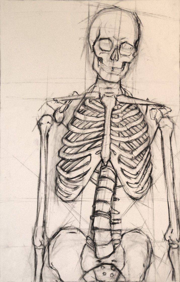 Drawn skeleton Remain skeleton lines drawings the