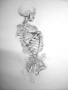 Drawn skeleton abstract Drawing ~xiao shoulder on Drawing