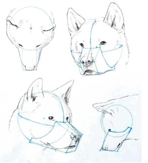 Drawn skeleton anime Human Arts Figure Canine Canine