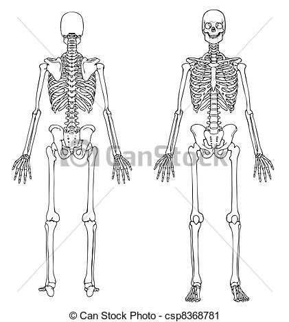 Drawn skeleton back Pictures  line drawing Photo