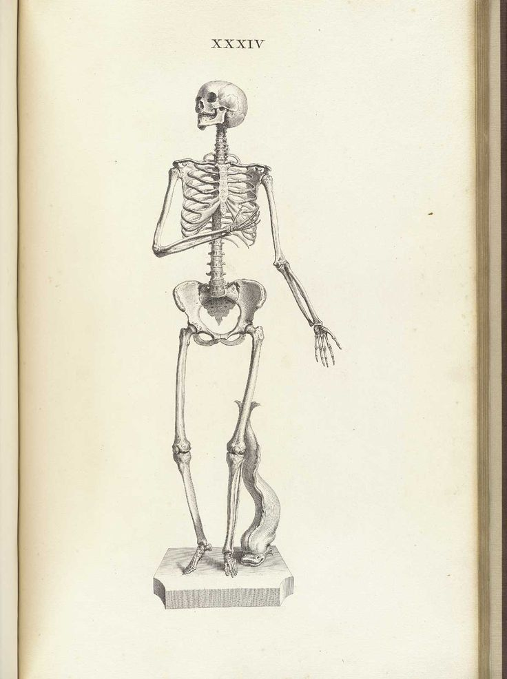 Drawn skeleton female skeleton Body bones Female ideas Cheselden's