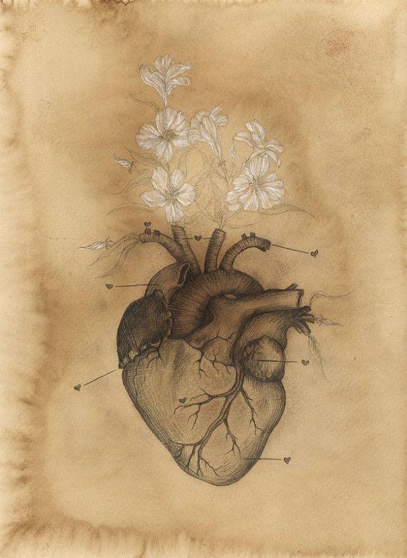 Drawn skeleton heart tumblr Anatomy on on Pin best