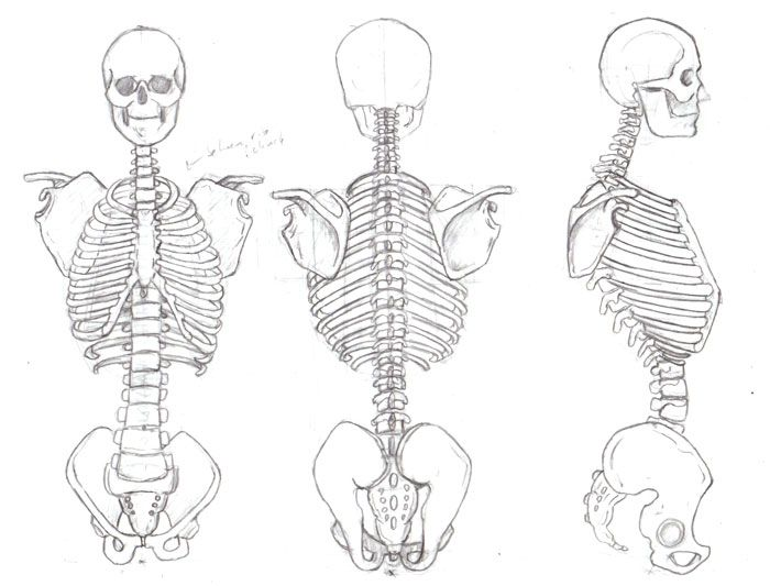 Drawn skeleton human form art Form of Human drawing Search