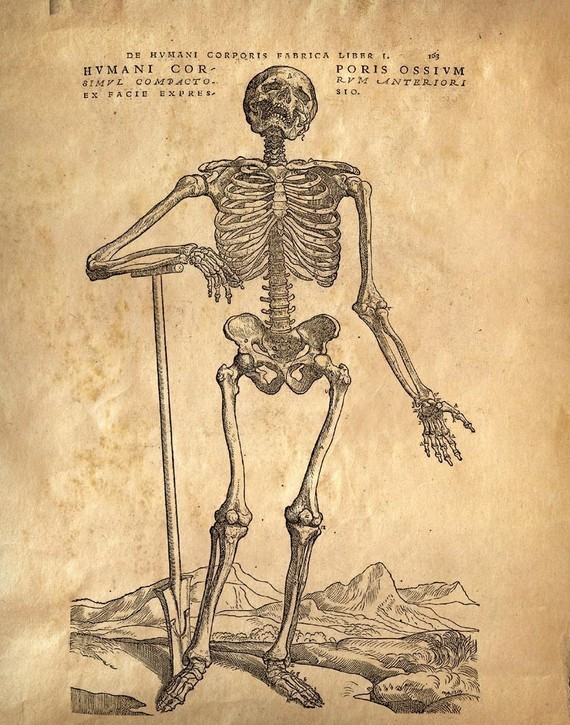 Drawn skeleton human form art Print Human Body Educational Vintage