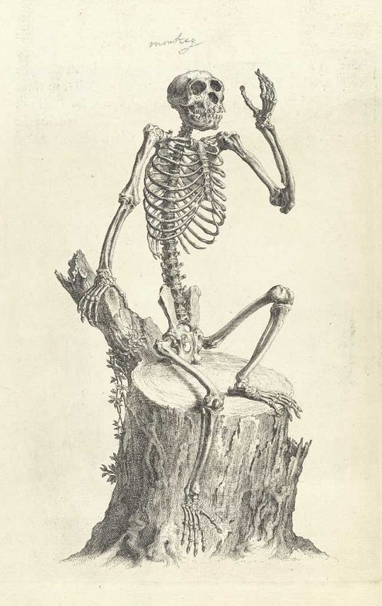 Drawn skeleton monkey Best Skeleton and on on