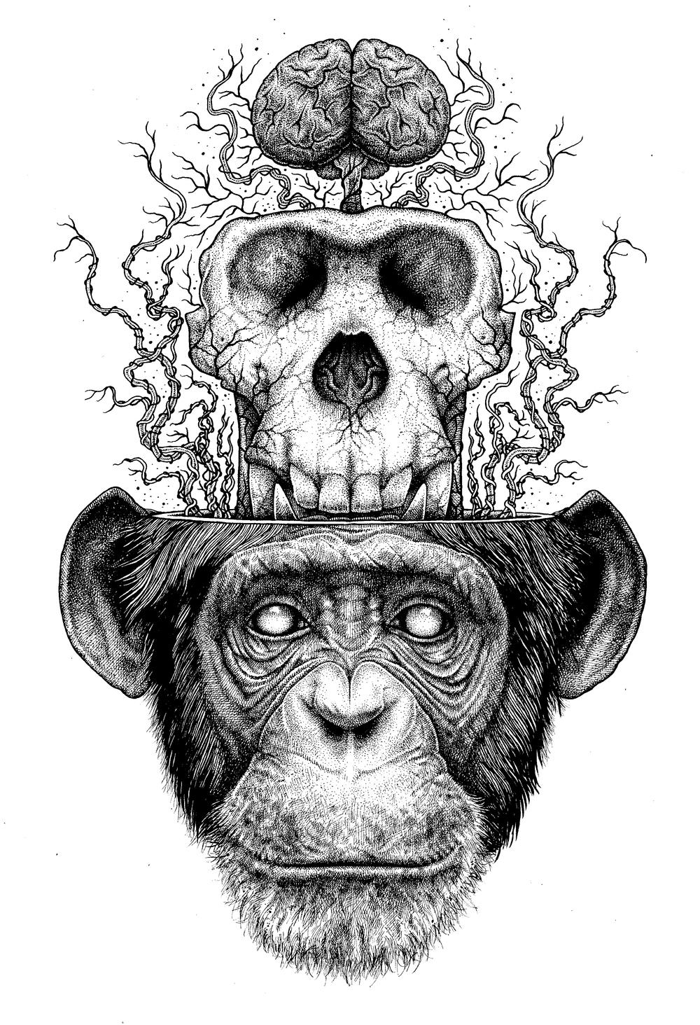 Drawn skeleton monkey Evil