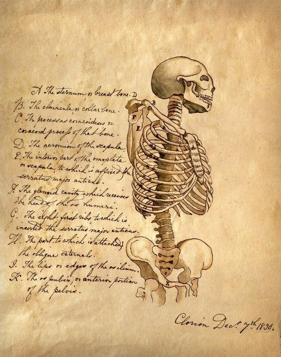 Drawn skeleton old 84 on Vintage 00 Anatomy