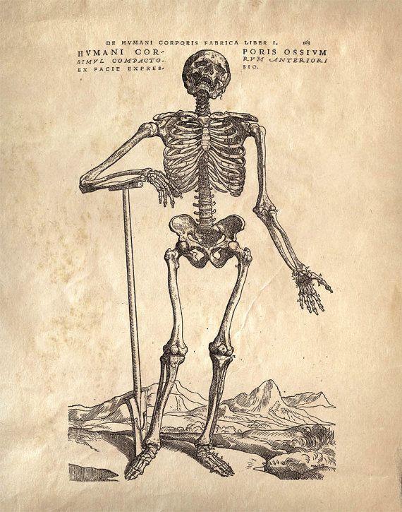 Drawn skeleton old 11x14 images Vintage Bones Anatomy