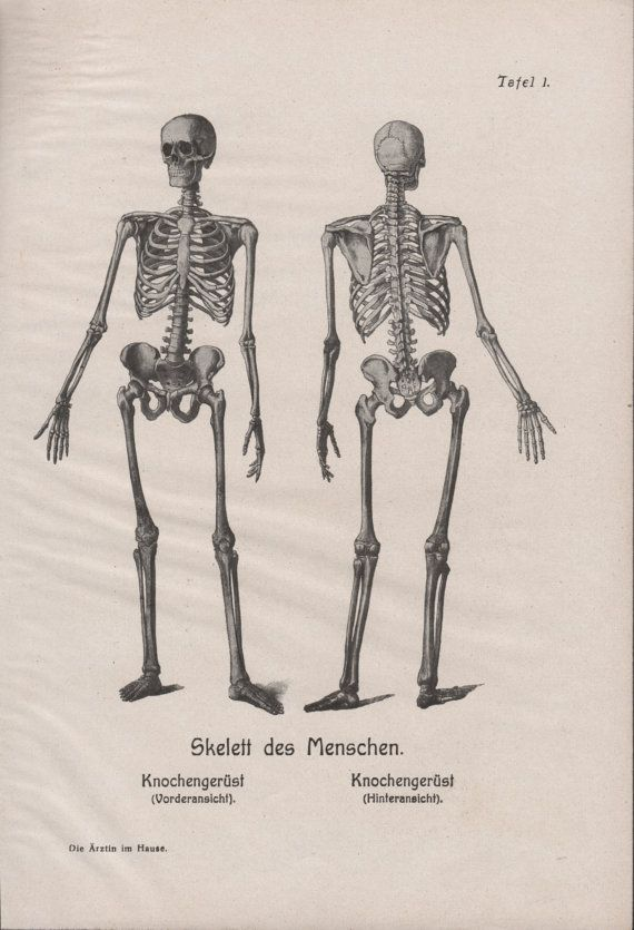 Drawn skeleton old Antique 1910 Bones Human Pinterest