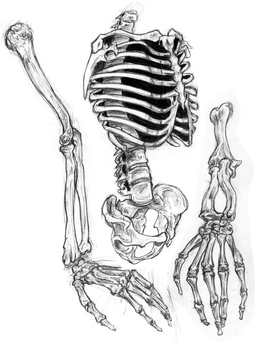 Drawn skeleton realistic See Half Awesome skull Art
