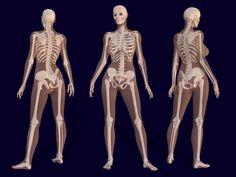 Drawn skeleton reference Vs mans is pelvis skeleton