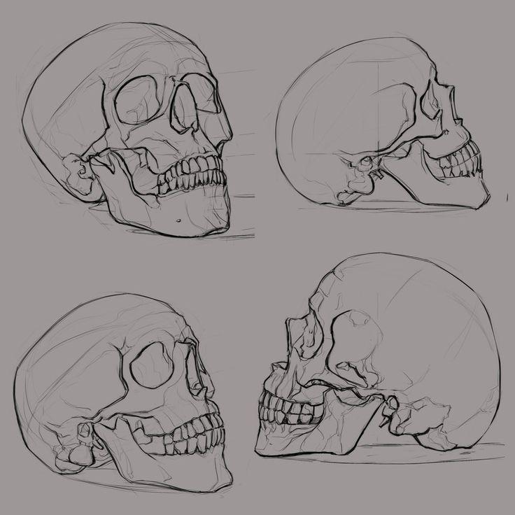 Drawn skeleton reference Deviantart skull_sketches_1 sketch ksenolog illustration