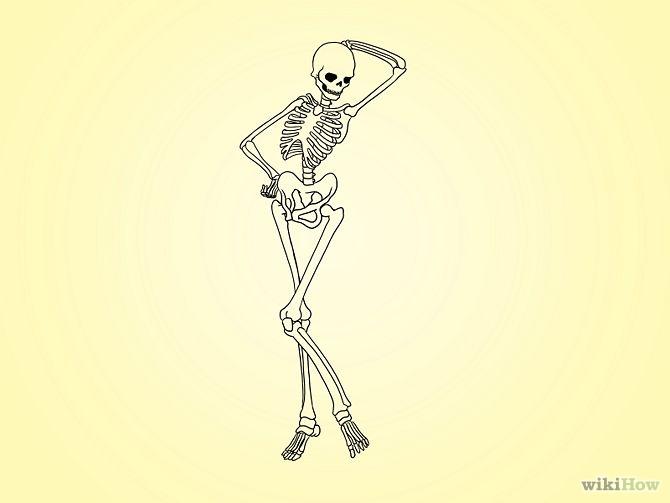 Drawn skeleton reference Human skeleton Pinterest of Search