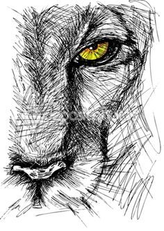 Drawn sketch Lion of drawn the at