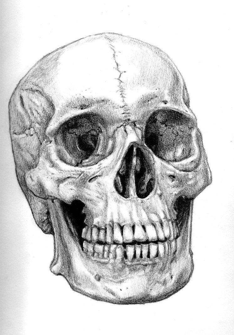Drawn ssckull Art Clip Skull  Drawings