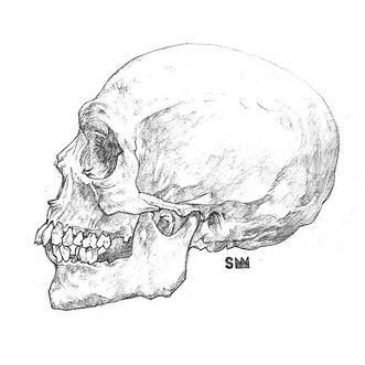 Drawn ssckull Black How 50 a Skull: