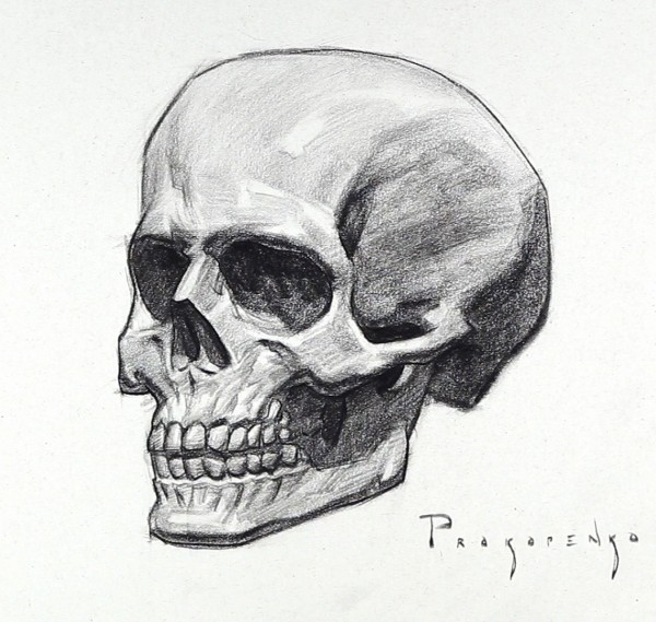 Drawn ssckull goat Of and Human Skull Drawing