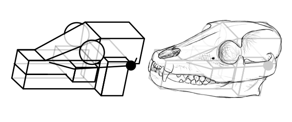 Drawn skull perspective Live to how Draw Space