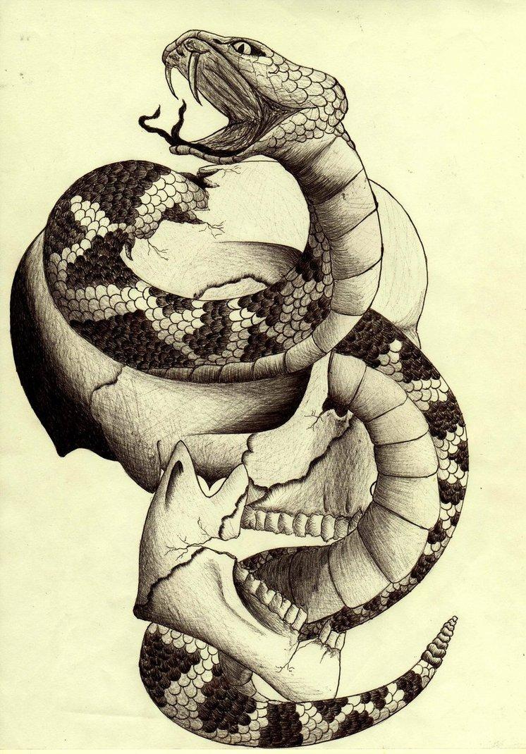 Drawn skull snake And Skull Snake  Drawings
