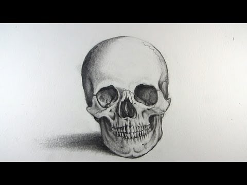 Drawn skull structure Head Drawing a Human to