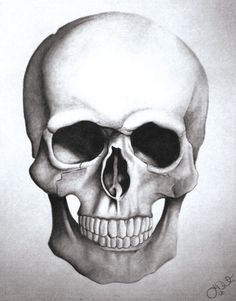 Drawn skull structure Drawing Cam Skull step to