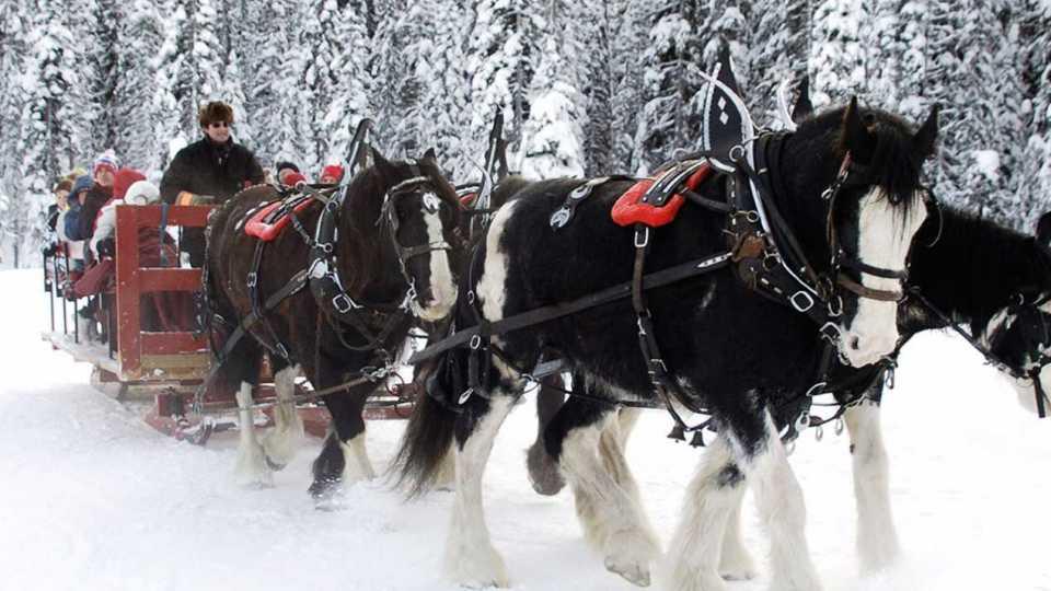 Drawn sleigh Sleigh Rides Sleigh Drawn Rides