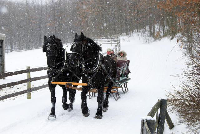 Drawn sleigh Woodlands Sleigh Drawn Horse Resort