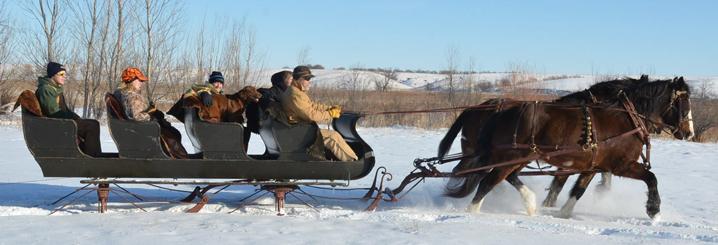 Drawn sleigh And Horse Wheel Sleighs &