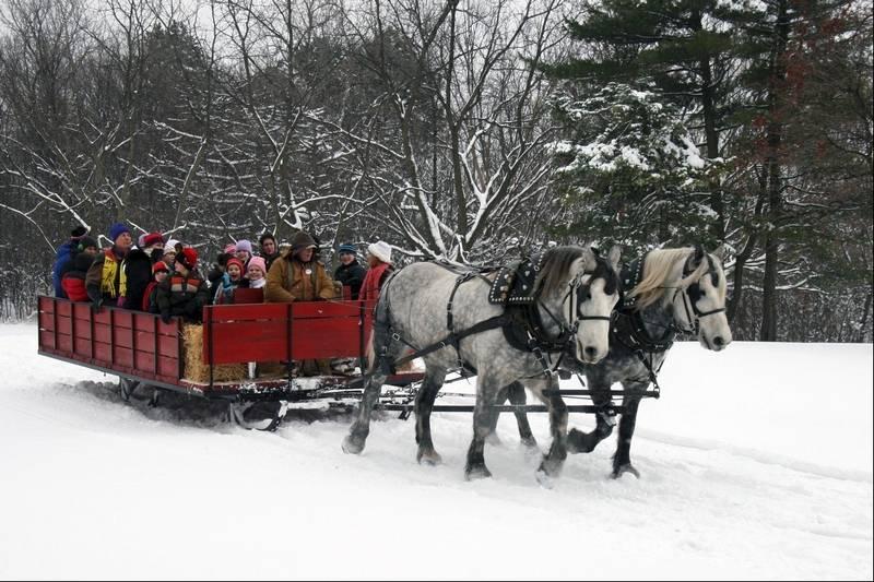 Drawn sleigh At sleigh drawn Horse Danada