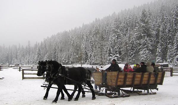 Drawn sleigh Ride Dude ride at Horse