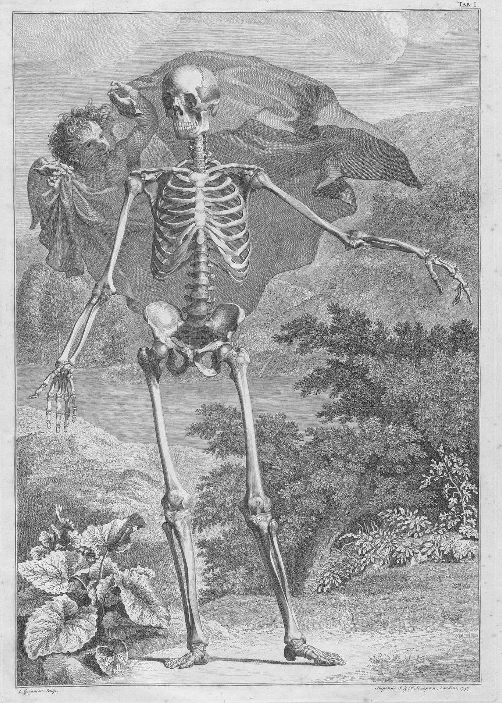 Drawn sleleton angel UT Engraving of Siegfried with