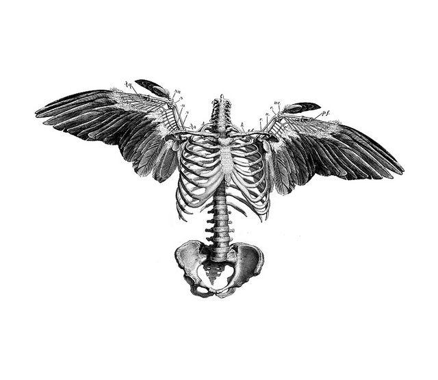 Drawn sleleton angel Tattoo by MizEnScen ArtAngel ·