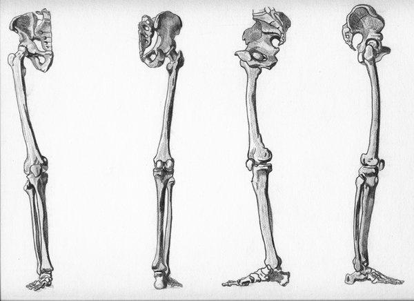 Drawn sleleton arm On View webfoe by by