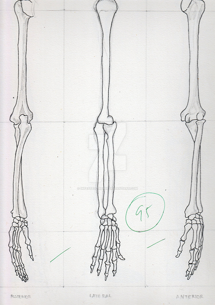 Drawn sleleton arm By Skeletal Arm Arm Skeletal