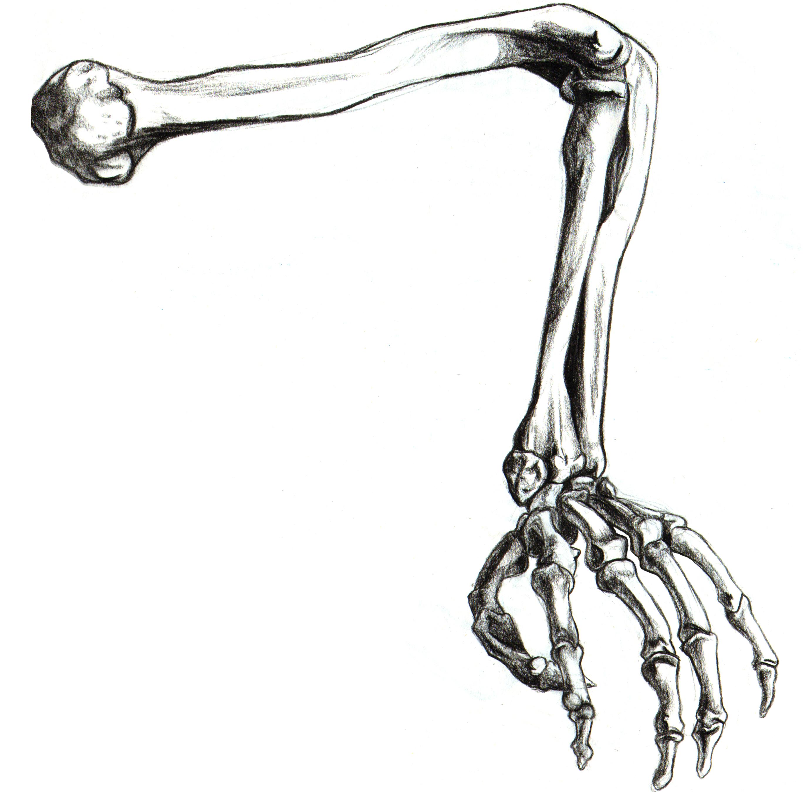 Drawn sleleton arm On Skeleton Art Arm Clip
