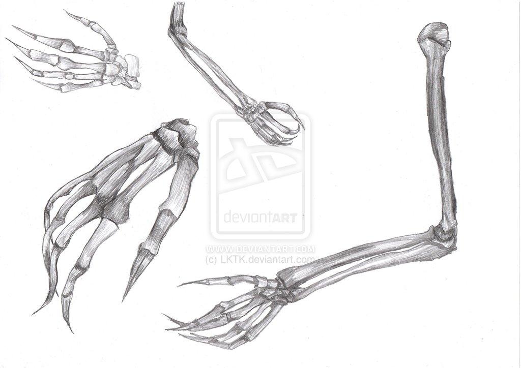 Drawn sleleton arm Images Skeleton Drawing Hands Hands