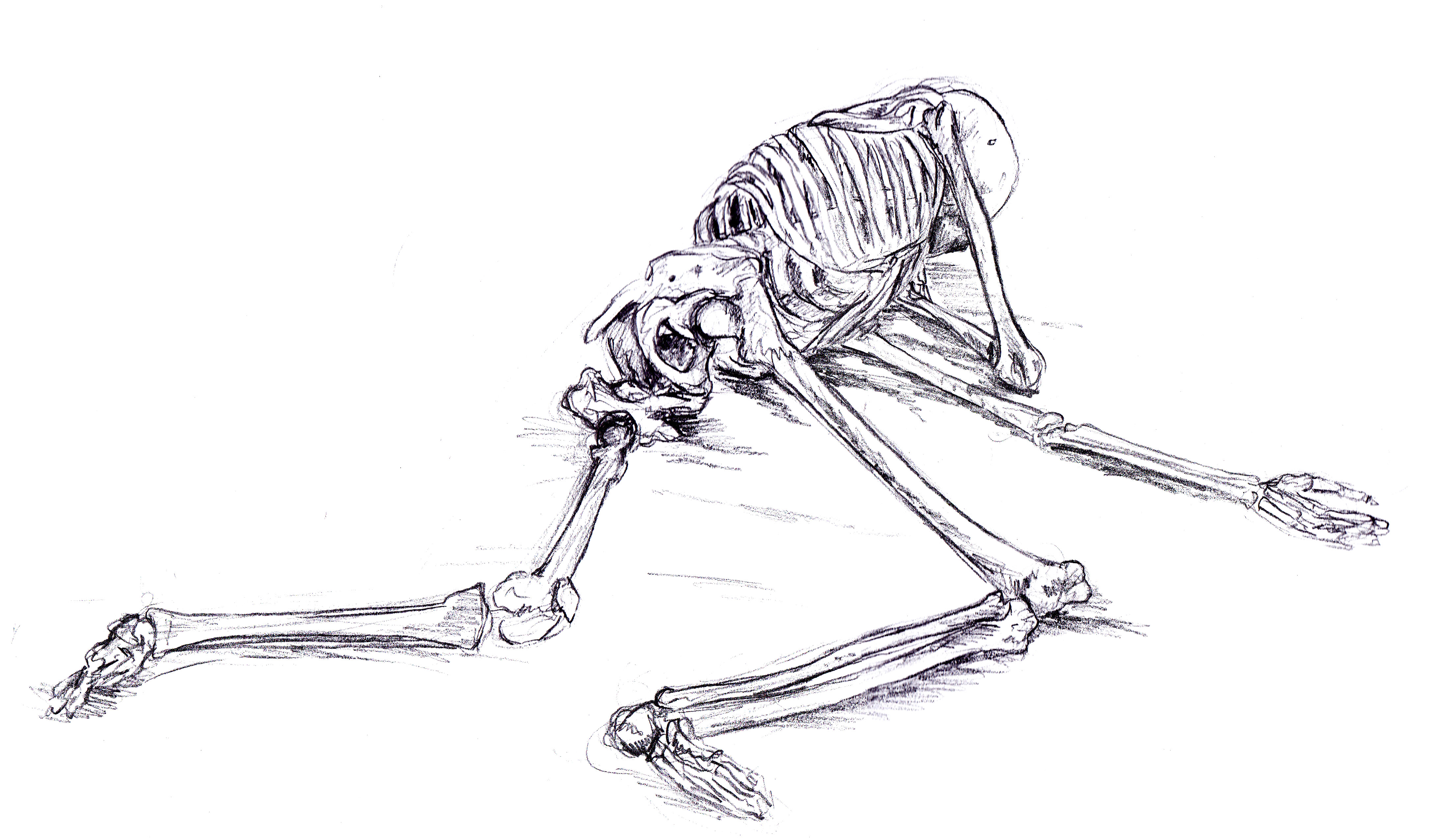 Drawn sleleton arm Vann around of is spread