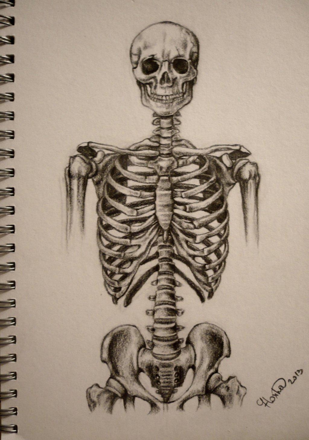 Drawn sleleton artistic Torso Skeleton of work Day