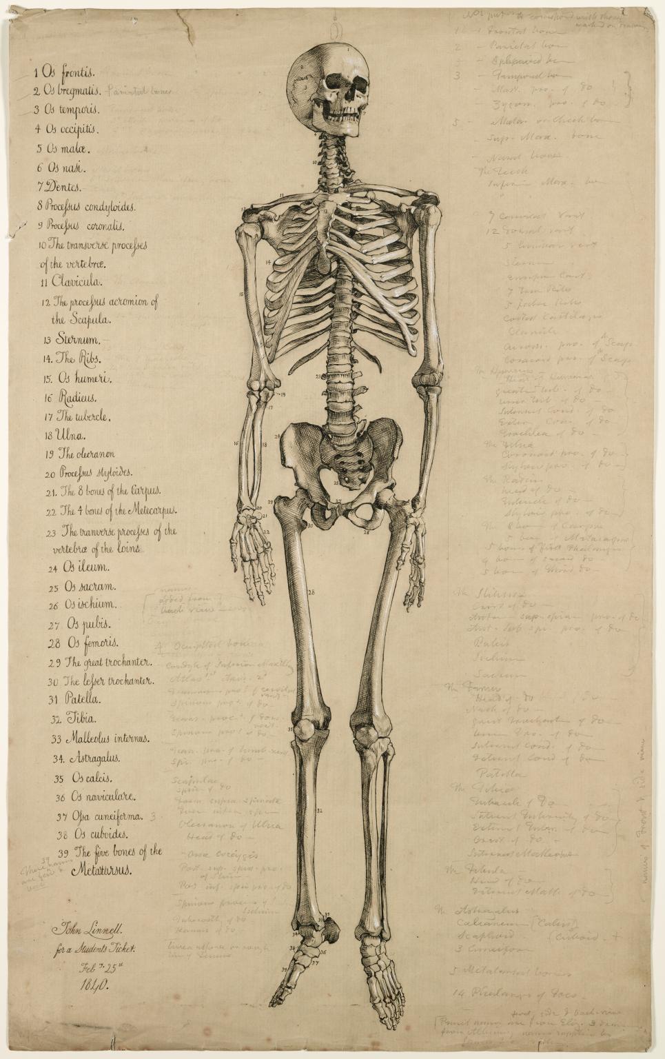 Drawn sleleton artistic Of drawing Anatomical 1840 skeleton