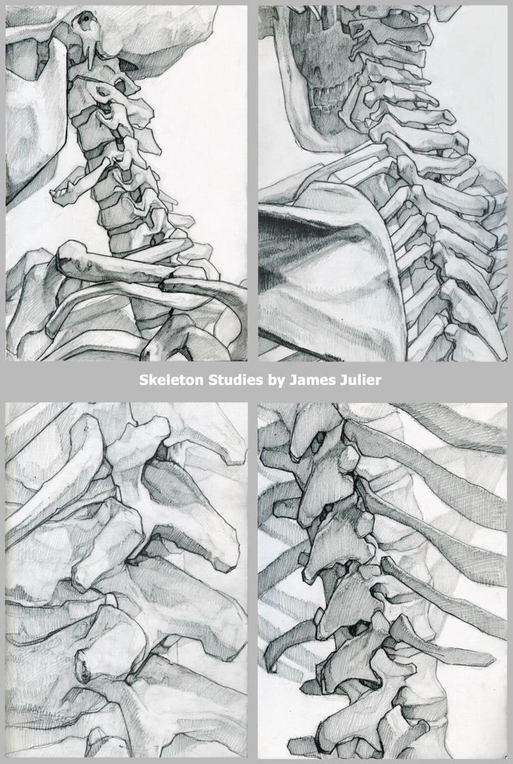 Drawn sleleton artistic Anatomy useful drawings vertebrae drawings