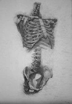 Drawn sleleton artistic Torso {human tumblr Schwarz James