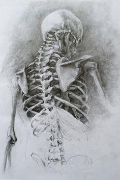 Drawn sleleton artistic And Pin Anatomia skeleton this
