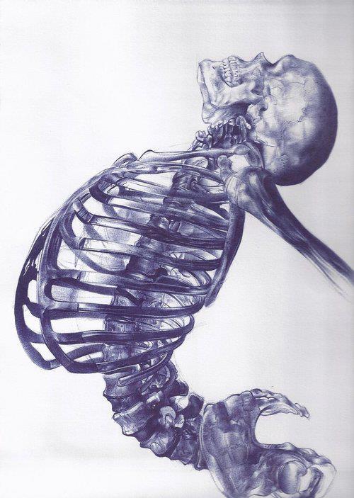 Drawn skeleton realistic Illustrations 25 25 illustrations new
