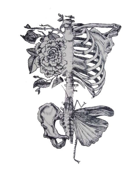 Drawn sleleton awesome Images on pelvis drawing best