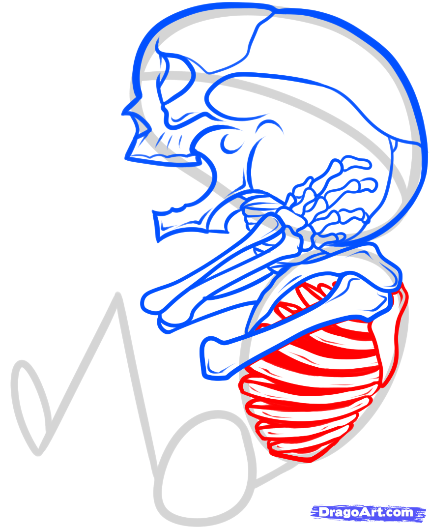 Drawn skeleton baby Step Step fetus fetus Fetus