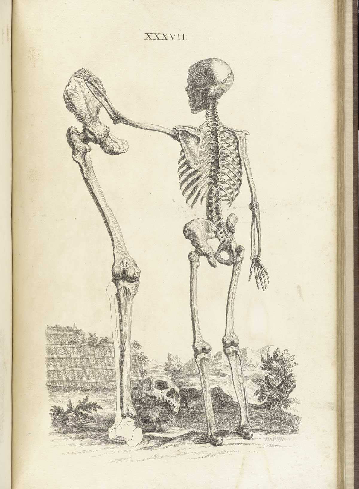 Drawn skeleton back The Engraving the viewer setting