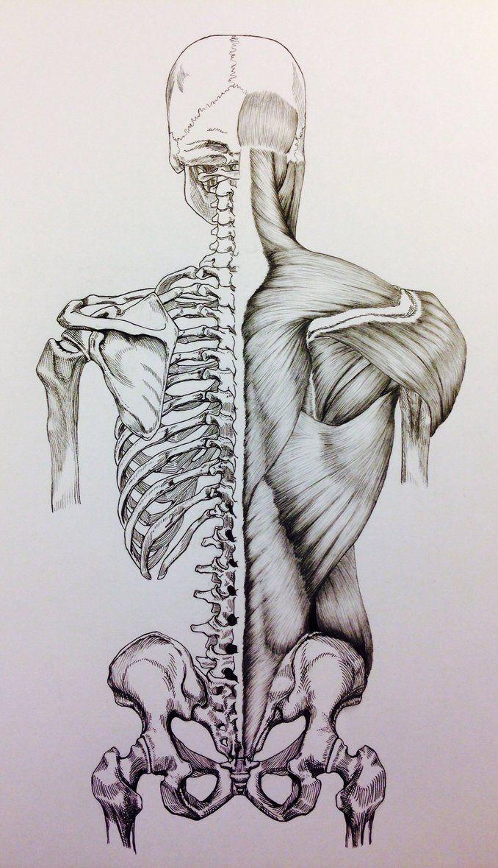 Drawn sleleton bone art 25+ Bones/Muscles Back Skeleton Death