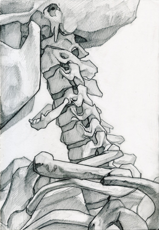 Drawn sleleton bone art Skeletal Studies Skeleton Pinterest anatomy